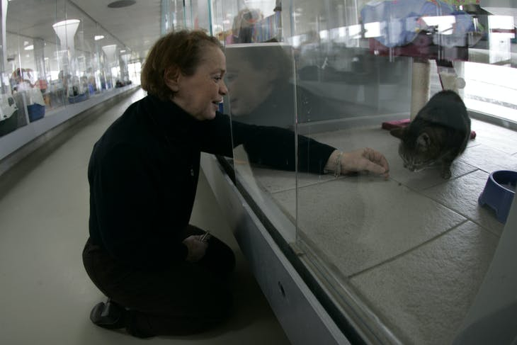A_volunteer_feeds_a_cat_in_an_glass_encl
